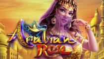 Arabian Rose