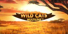 Wild Cats Multiline
